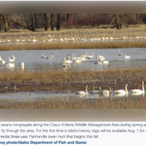 First time in Idaho, Sandhill Crane and Swan tags available August 1
